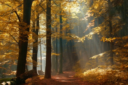 Sunlight filtering through autumn leaves symbolizing the autumn of earthly life and promise for something beyond